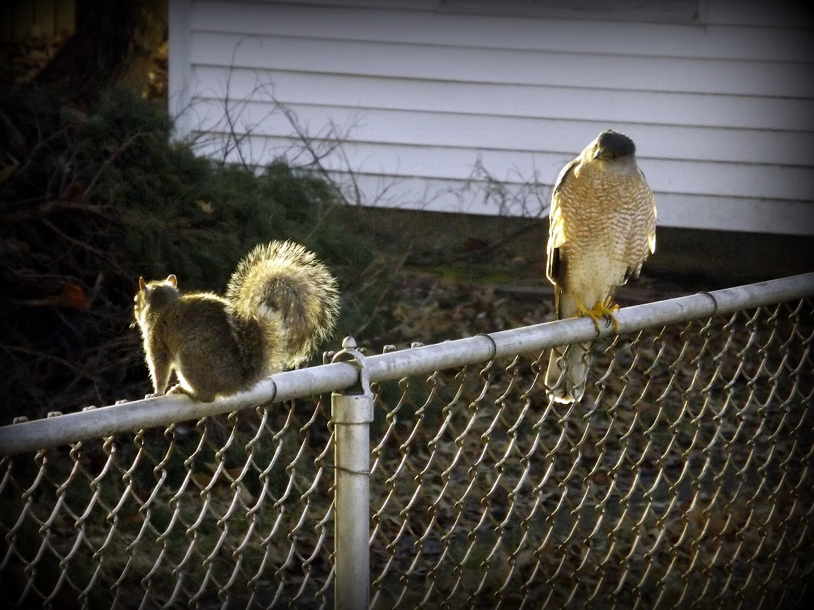 When you scamper up a fence without looking first.<br>http://pic.twitter.com/mlG7zZmcqH