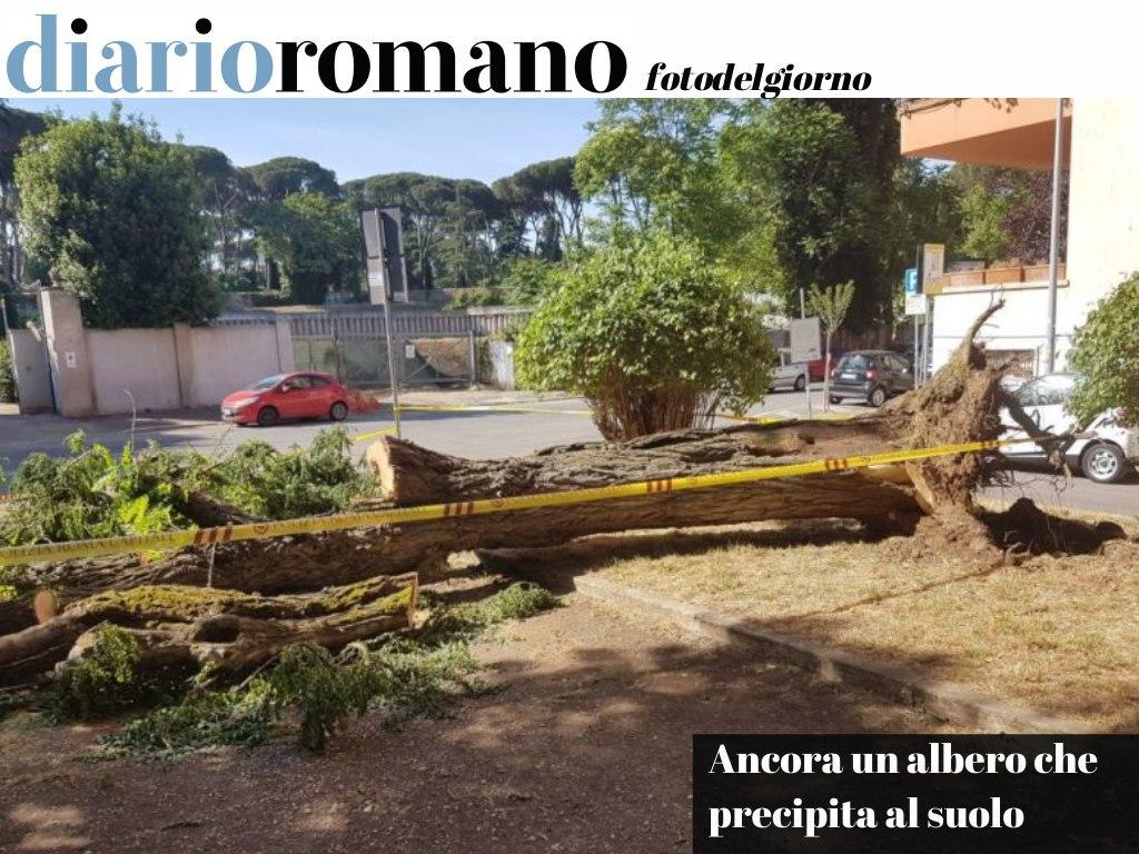 test Twitter Media - Via Lisbona, un albero molto alto è caduto improvvisamente per il vento. Per fortuna non ha causato danni. Manutenzione e potature sempre più indispensabili. . #Roma #foto #lettori 📸 https://t.co/uoGazSiBzB