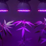 Image for the Tweet beginning: #cannabis #marijuana #weed Letter: Vote