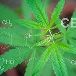 Image for the Tweet beginning: #cannabis #weed #marijuana மே 18