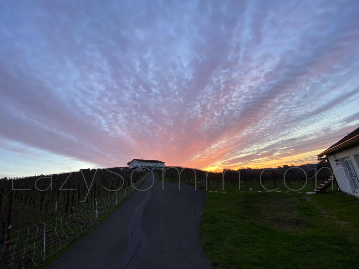 The sunset at Maboroshi Wine, Sebastopol. Enjoyed the visit and their wines at this beautiful property. @Maboroshiwine #maboroshiwine #pinotnoir #winery #sunset #vineyard #winetasting #ピノノワール #ワイン #マボロシワイン #カリフォルニアワイン #ソムリエ #somm #sommelierpic.twitter.com/2pMQUUre4L