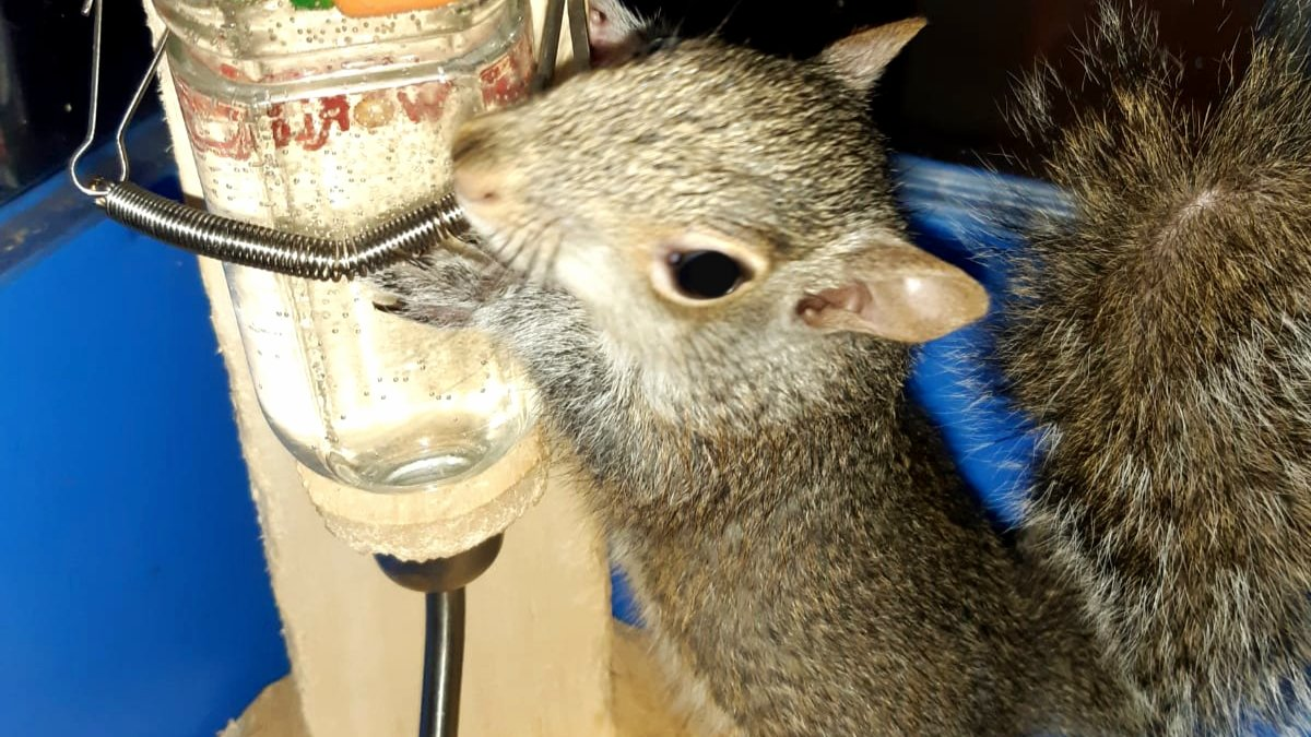 WATER IS LIFE! But not every animal is lucky enough to have it on tap. Please remember our wildlife neighbours during the hot and dry weather, and put out water for them if you can! #urbansquirrels #water #wildlifepic.twitter.com/tUwVYTSX5p