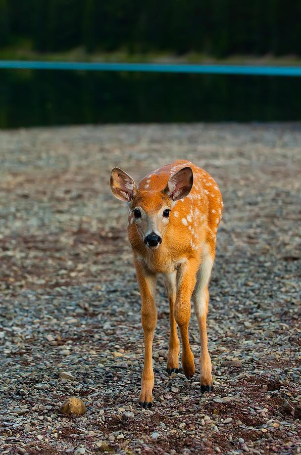 "#POTD for 05-28 ""Bambi"" https://t.co/1Y97jxTwbR #photography #photo https://t.co/1yRhi5EOmk"
