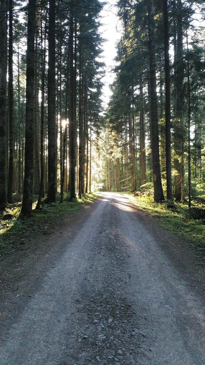 Morgens früh, mittags wieder heim oder abends spät, wenn die Sonne tief im Westen durch die Bäume strahlt. Die Fahrzeiten #mdrza haben sich während Corona geändert. 351649pic.twitter.com/1EW6DSFYcq