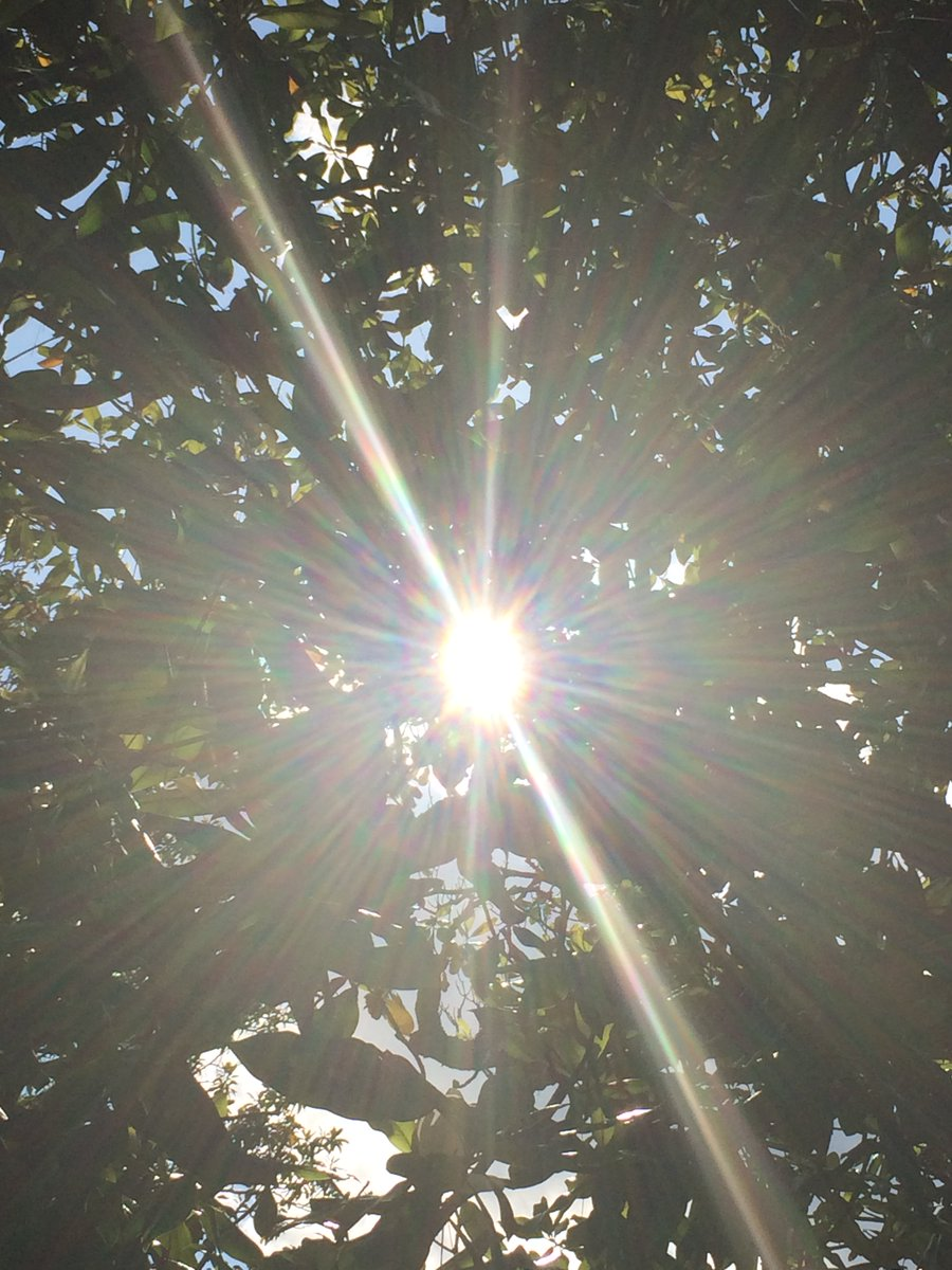 Sun Shining Through This Tree☀️🌳 #May2020  Photo By: Joseph Hill🙂📸☀️  #sunlight #bright #afternoon #spring #tree #daylight #lookingup #beautiful #Amazing #wow #awesome #Peaceful #daytime #SouthernPinesNC #May https://t.co/2ulqLVXDT3
