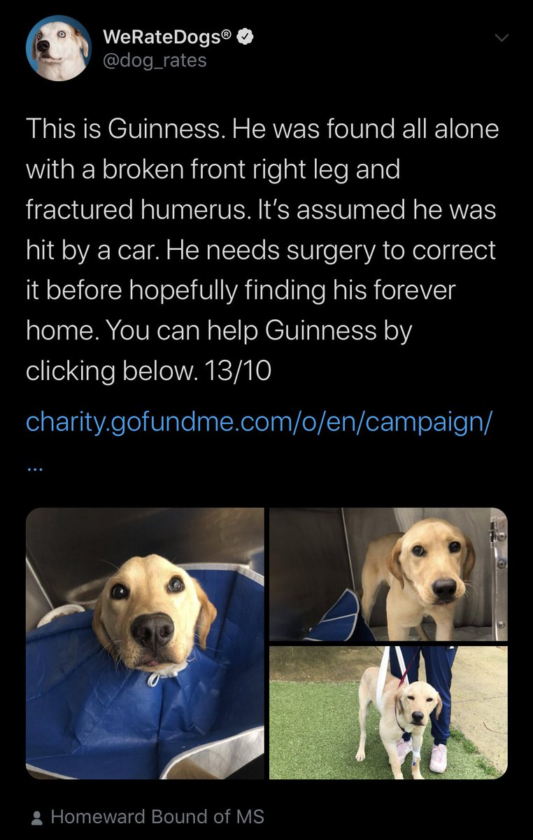 i just received possibly the best pupdate ever... remember Guinness? https://t.co/kZOPweByme