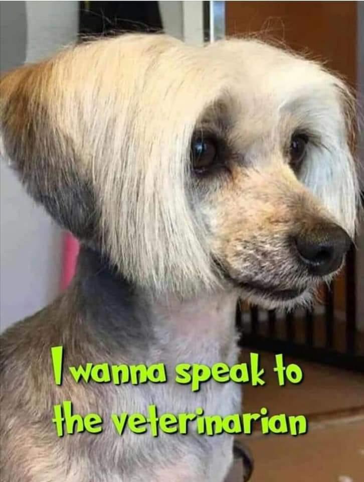 The Qaren dog hairdo. pic.twitter.com/lB1iUuUd40