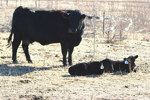 K-State beef cattle experts will host a free webinar on June 4 to discuss management decisions in light of Kansas' current weather patterns and calf market volatility.  Register for the webinar online at https://tinyurl.com/KSUBeef-ToolsandTips… or at http://www.KSUBeef.org.pic.twitter.com/V1ygq45voD