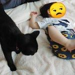 【いつまでも見ていられる癒しの4枚】むちむちな脚で蹴られる黒猫ちゃん