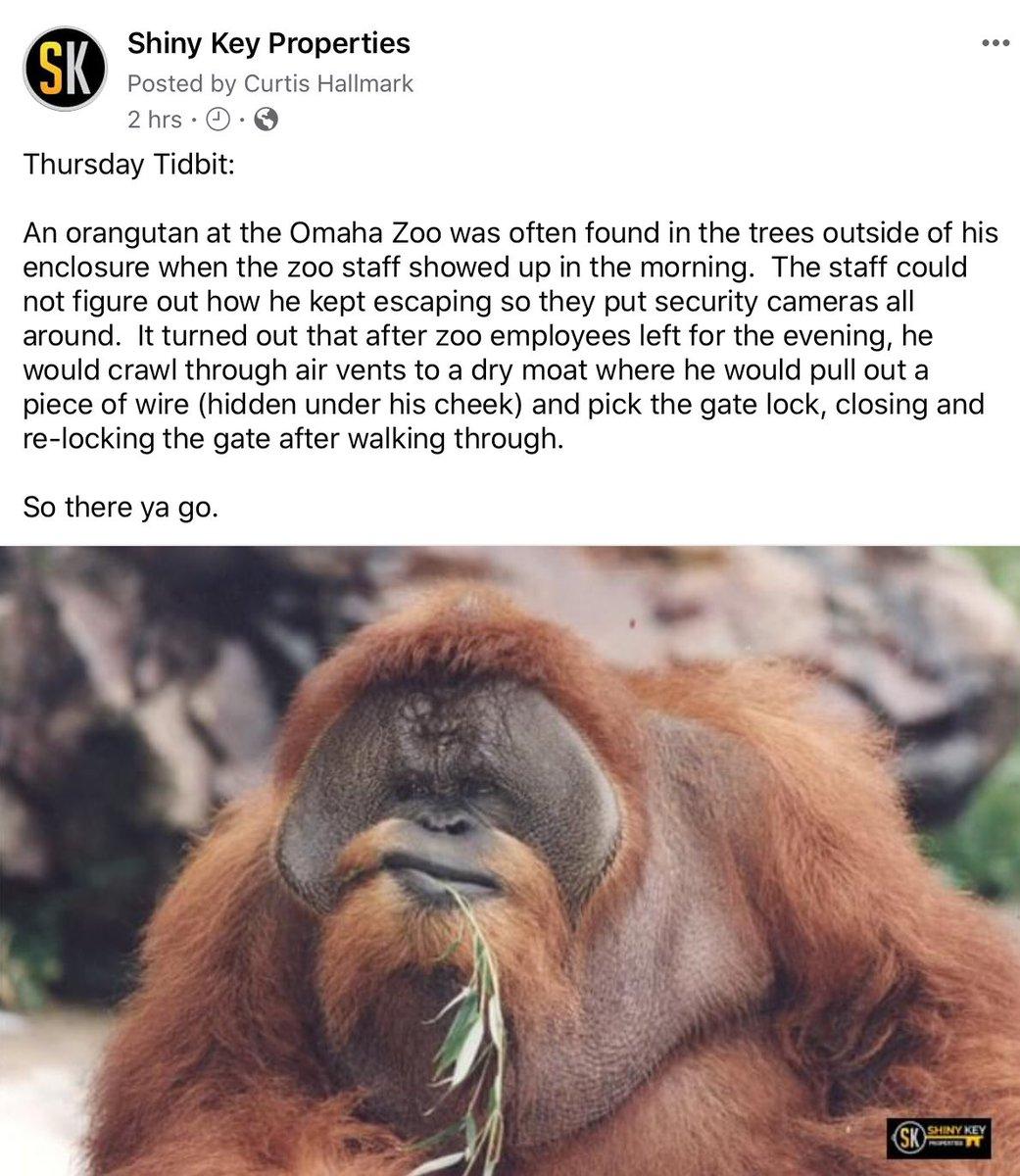 #shinykeyproperties #thursdaytidbit #orangutan #escapeartist #interestingfacts #didyouknow #omahazoo #houdini #business #realestate #sellmypropertyfastdfw #funny #lockpicking #reasontosmilepic.twitter.com/u1ANCz7IDk