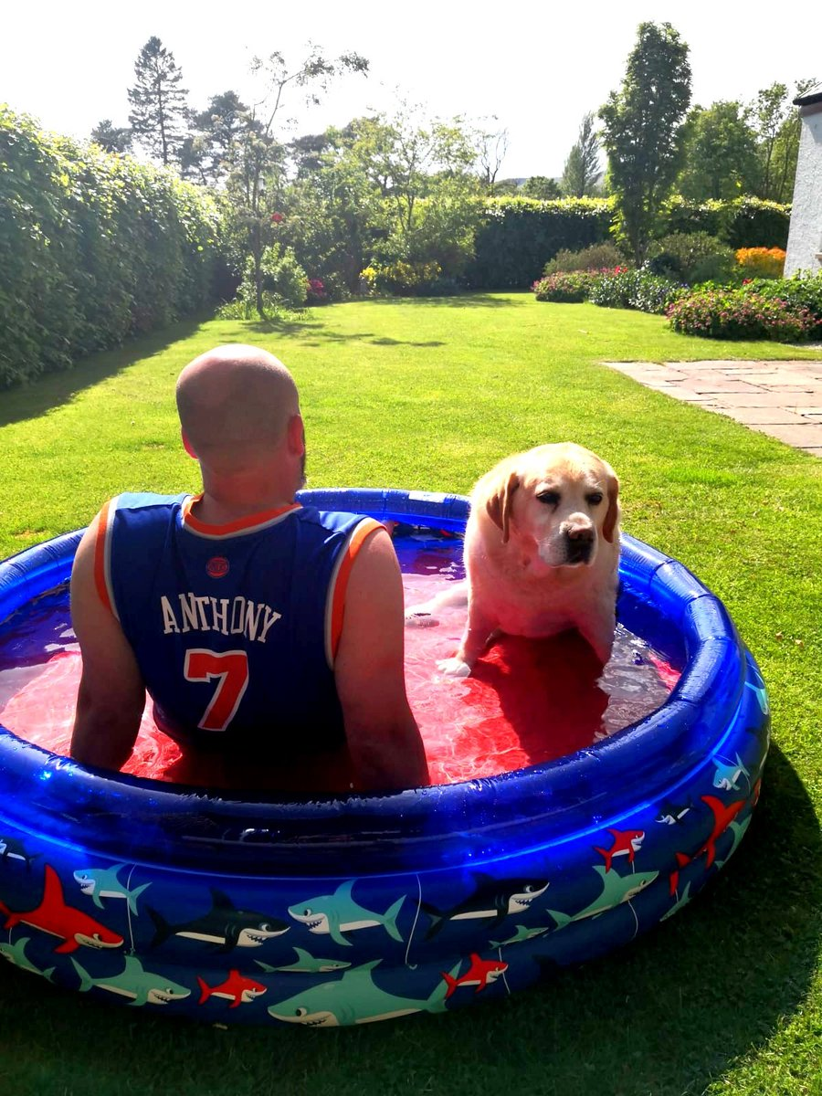 So daddy wanted to cool me down But I was unsure and nervous about the paddling pool So daddy got in to encourage me in (with some apple) Ye... I still wasn't sure! This ain't like a river! #dogsoftwitter #dogs #Dog #dogsofinstagram pic.twitter.com/qlqV8jshzl
