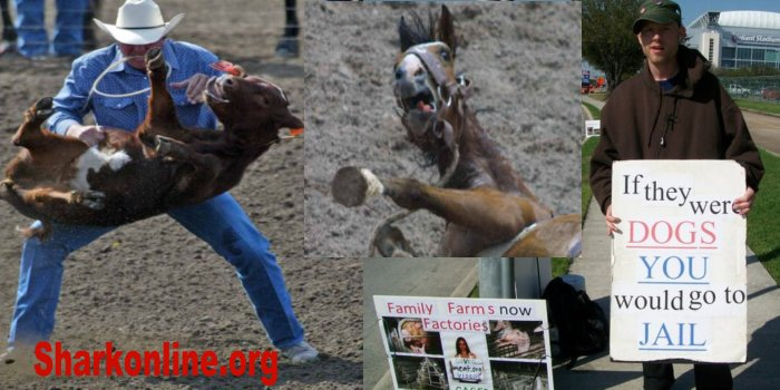 Pic from back in the day protesting the #Rodeo in #HoustonTX when I was #texasliving   if they were #dogs  u would go to jail, #speciesism (love pets while  abusing other species) as #racism and #sexism #rodeos #rodeocrowns #COWBOY #CowboysForTrump VS #GENTLEMEN #AnimalCruelty pic.twitter.com/SCg5zu7JFP