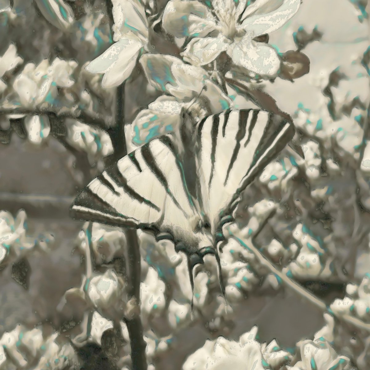 Swallowtail In Cherry Tree IV  Digital Art created via Convolutional Neural Networks and Deep Learning  #art #swallowtail #papilionidae #butterfly #insect #cherry #blossom  #outdoor #animalpic.twitter.com/5i46HSKzni