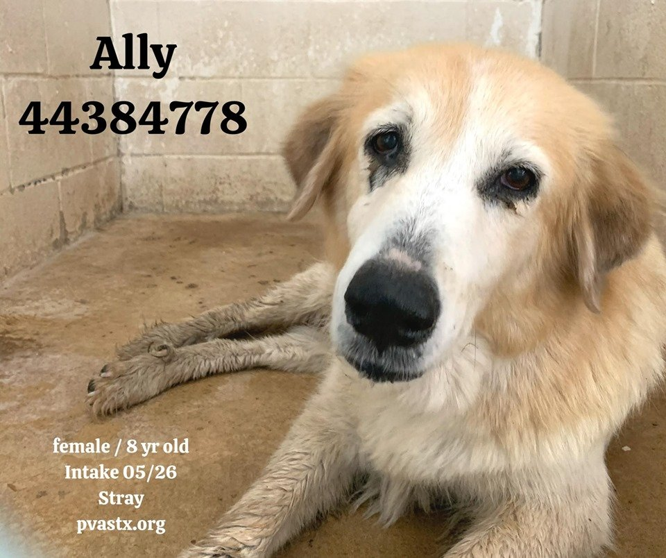 I would give you my heart if you gave me a Chance , I know it`s not much but it`s all I have ❤️💔 All stray dogs that dont look like theyve been fighting for survival on the road for a long time, abondoned when they became superfluous⁉️😭 rescue@pvastx.org