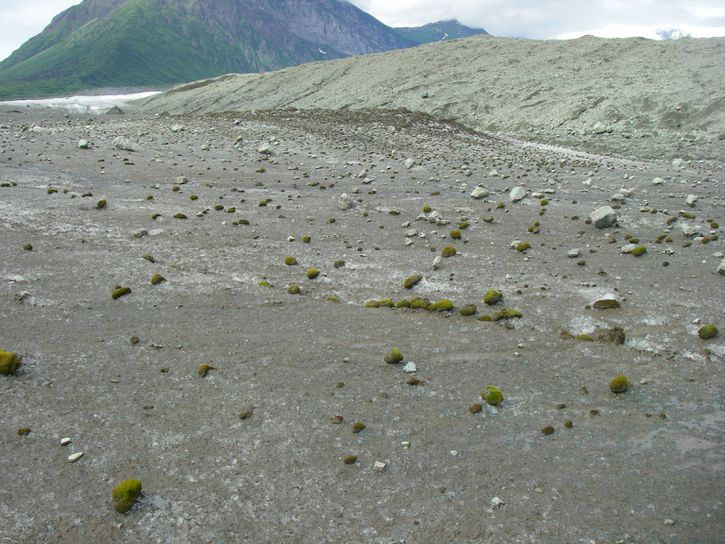 Glacier mice have no feet, but they still move in herds https://t.co/JvBCmor9bV https://t.co/yOIDKBw9GF