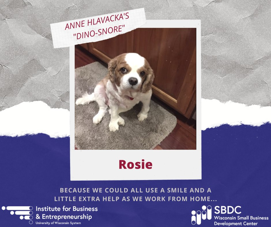 #PetsofSBDC: Rosie's  famous snore  is a great source of laughter on our virtual #SBDC calls while #WFH.   Ask @UWLSBDC Director Anne Hlavacka if Rosie always looks so innocent YET mischievous. #Pets #witreppic.twitter.com/L5xcC52Kvd