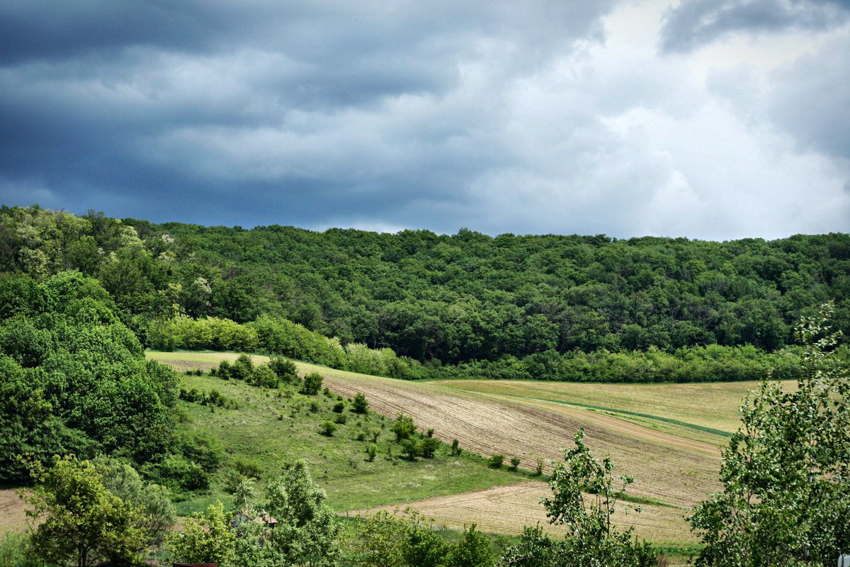 About to rain   #rainy #landscape #nature #greenforest #natureshots  pic.twitter.com/aRmQi9HuEo  by Annemarie Ventel