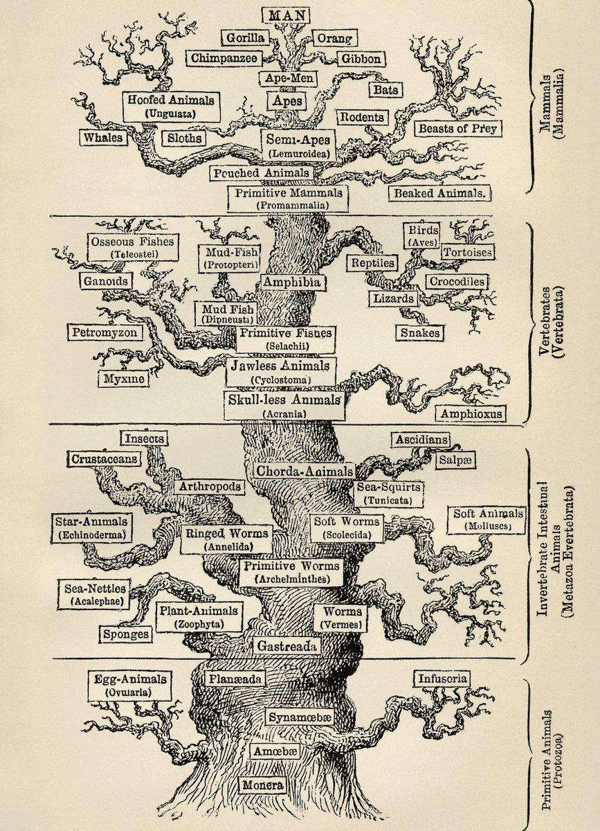 Charles Darwin (limited holism) Entropy Project cih.ru/a1/e48.html Чарльз Дарвин (ограниченный холизм) Проект Энтропия #architecture #Entropy #Chaos #архитектура #Darwin #holism ▄▀ via @cihru
