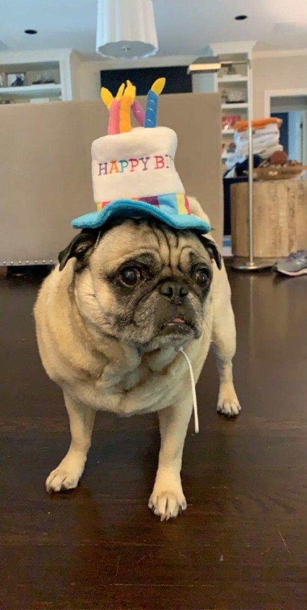 Happy Birthday Duke. 9 years old today. #pug #watchuspic.twitter.com/dCzw2Mv7NV