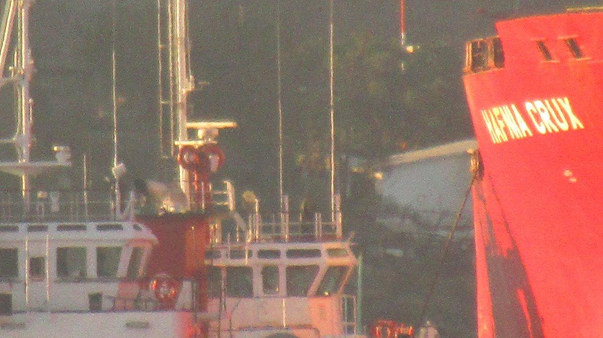 #bulktank #hafniatankers #denmark #denmarkflag powered by two @boludacm #bwgroup #shipspotting  #lifeonship #humanatsea #shipspotter #discoverocean #ocean  #marines  #seafarer #lifeonship #coolmariners #shiplife #lifeatsea #sailinglover #captain @APIGUAYMASpic.twitter.com/QcBwmg5LE0
