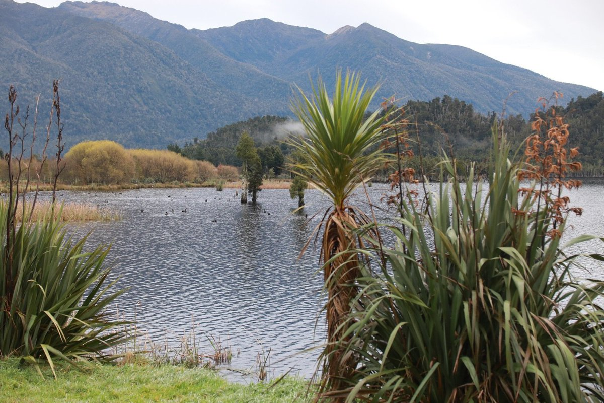 """Its original name highlights the potential of this project to restore the dawn chorus in an area that is known for its rich birdlife."""" @EugenieSage Kotuku Whakaoho/Lake Brunner. #nzpol"""