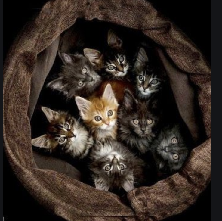 "#WritingCommunity!  #writerslift! #amwriting!  Drop your #book, #wip, #website, #blog, #poetry, #coverart...  #Follow, #RT, #heart, #comment  We follow back!  Bonus: Struggling with voice or vision? This kitten in the middle asked me to tell you, ""Dare to be different.""pic.twitter.com/Lm55VBBMiU"