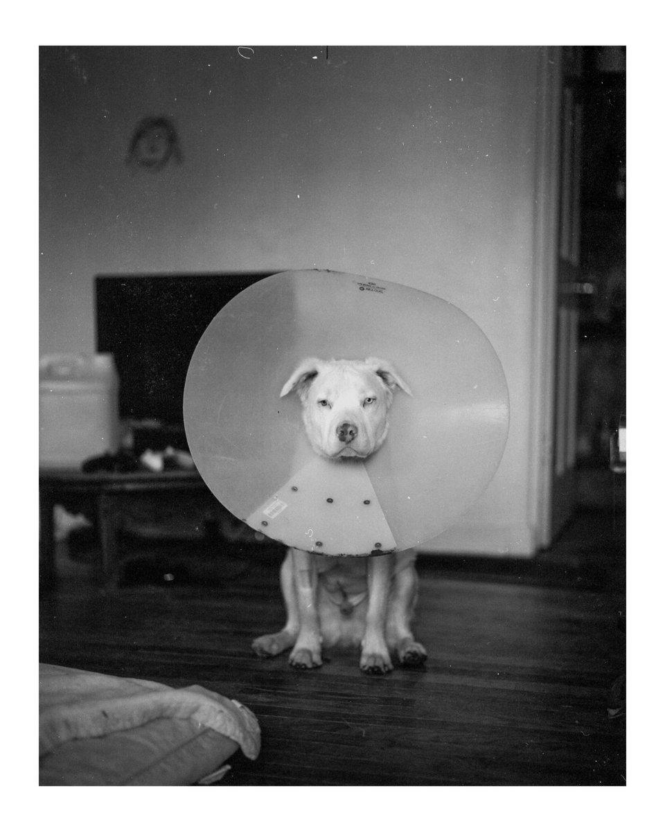 Grumpy Boi [Pentax 67, 105mm 2.4, Ilford HP5 Plus] #analog #analogue #analogfilm #analogphoto #film #filmphoto  Instagram: dcbee pic.twitter.com/CjZTleOYNO  by Analog Process