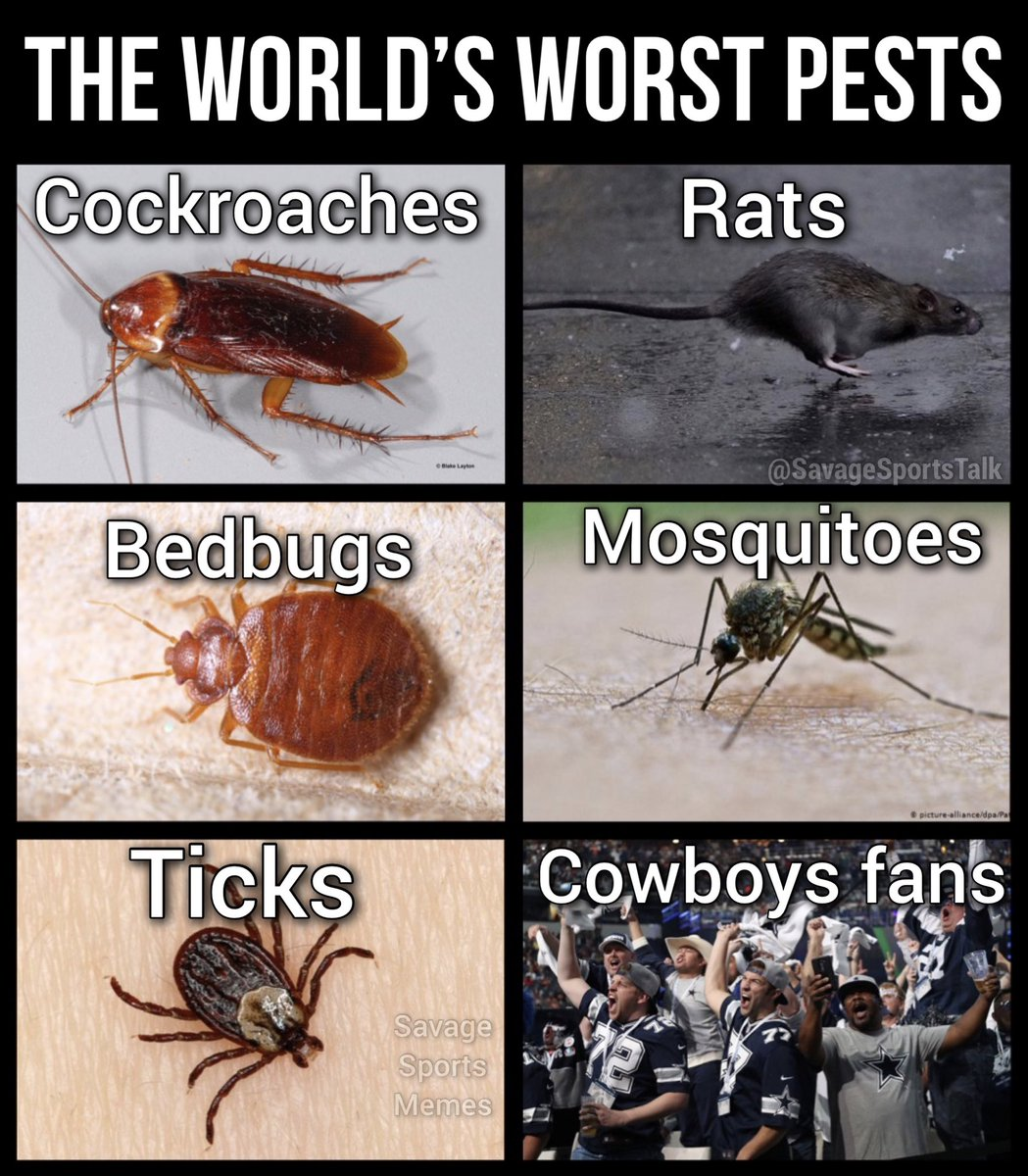 #NFL #NFLmeme #NFLmemes #football #footballmeme #footballmemes #meme #memes #sports #sportsmeme #sportsmemes #cowboys #dallas #dallascowboys #dak #dakprescott #jerryjones #demboys #demboyz #zeke #bedbugs #rats #ticks #cockroach #mosquitopic.twitter.com/y3TlLEho7T