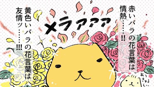 花言葉は…!!!#ローズの日🌹 #バラの日🌹 #あついさん #ひだまりさん #カピバラさん