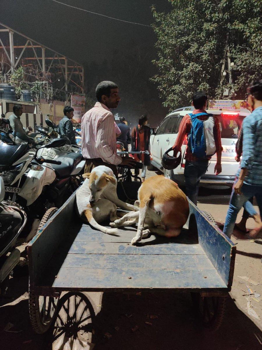 Only a poor man knows the worth of unconditional love because he has nothing else to value. ~𝖀𝖗𝖛𝖆𝖘𝖍𝖎~ A rikshaw wala giving joy ride to his strays & the babies enjoy the free ride. Spread love to them.  @Sachbang @pfaindia @PetaIndia @Manekagandhibjp #writerscommunitypic.twitter.com/EkDOPUaUqp