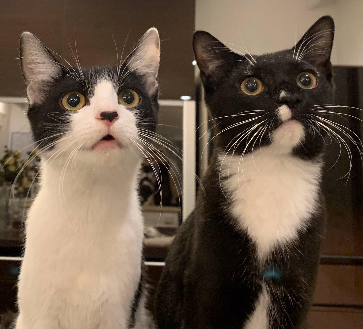 ブルーインパルスに心を奪われる猫#医療従事者の皆様に#感謝