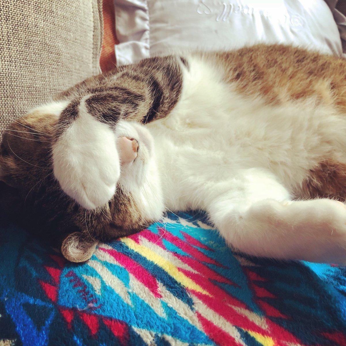 ソファでこんな生き物がこんな愛らしい寝方してたら正直困るな…