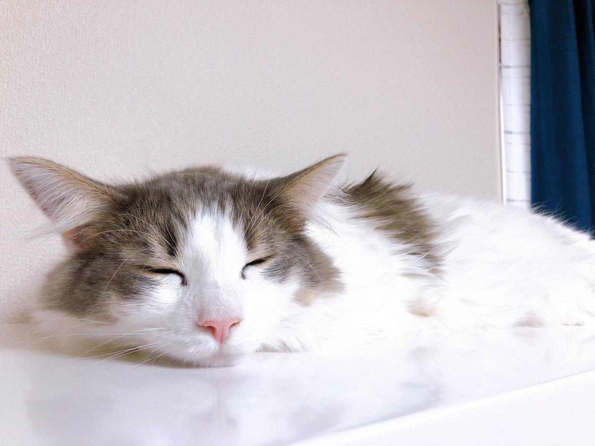 猫が溶けました💤