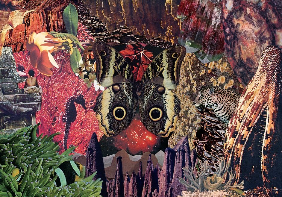 """15x19"""" Hand cut collage from nature books #collageart <br>http://pic.twitter.com/YMEd6X4ZsD"""