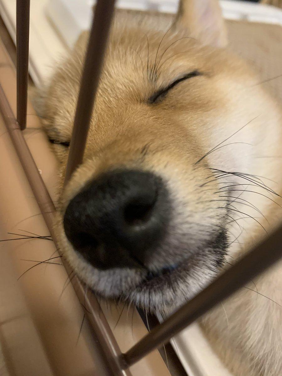 ミスりょう君隣で寝てる可愛い