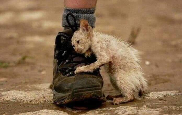 Caring for animals is human nature !!  ... a man is truly #ethical only when he obeys the compulsion to help all #life which he is able to assist, and shrinks from injuring anything that lives.  - Albert Schweitzer -  #compassionforanimals #animalrights #love #GoVeganpic.twitter.com/zzOtKkknY8