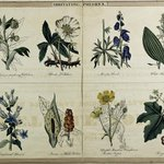 """It's a poisonous #FloraFriday + #FungiFriday! ☠️ 🍄🌼   """"A table of vegetable poisons"""" (1843) describes the characteristics, locales, and effects of poisonous plants & mushrooms found throughout the world. Find it in #BHLib via @mobotgarden ➡️ https://t.co/hkeH2EO3qb"""