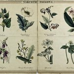 "It's a poisonous #FloraFriday + #FungiFriday! ☠️ 🍄🌼   ""A table of vegetable poisons"" (1843) describes the characteristics, locales, and effects of poisonous plants & mushrooms found throughout the world. Find it in #BHLib via @mobotgarden ➡️ https://t.co/hkeH2EO3qb"