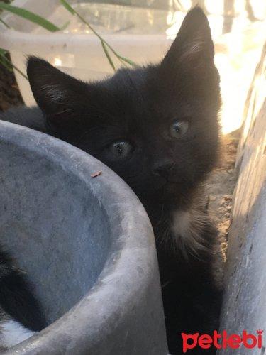 #Manisa #Kedi Çok #Oyuncu Ve Minik 2 Aylık ☺️☺️