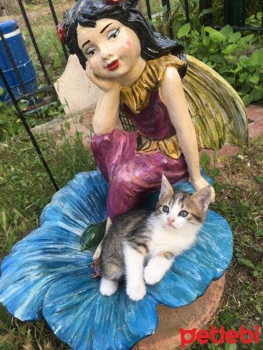 #Manisa #Kedi 2 Aylık #Oyuncu Ve Uslu