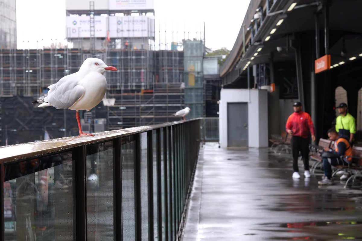 Physically distancing seagull   #Sydney pic.twitter.com/X4V1777oTV