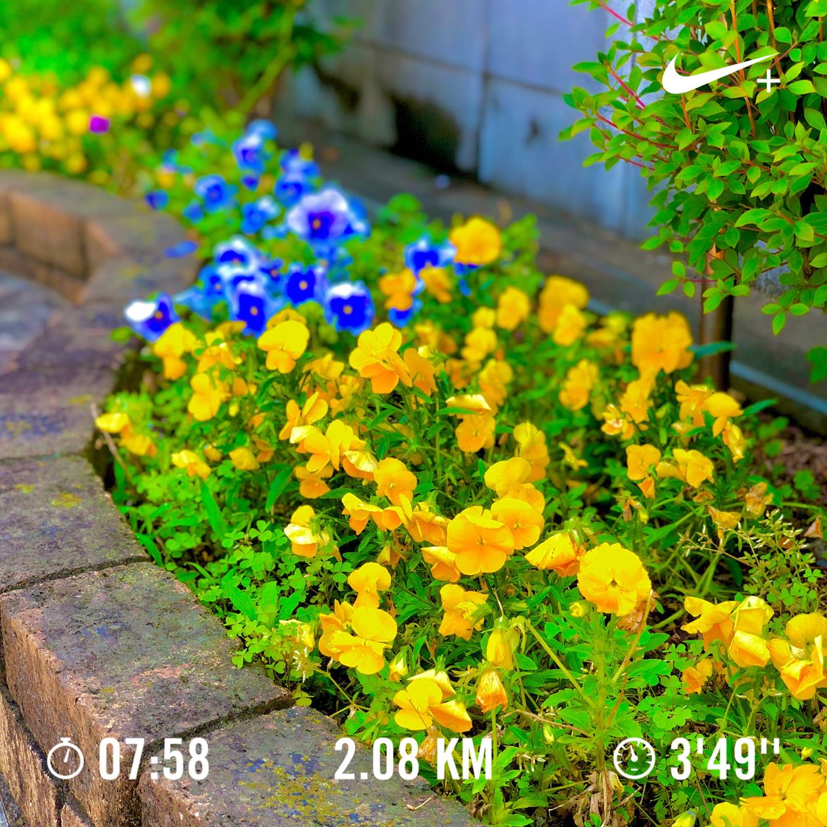 Ran evening with she and Nike⁠ Run Club. at Last, Summer has come. Let's bootcamp for Autumn harvest Sep 15, so #justdoit now! pic.twitter.com/Ft6nFKPK9t