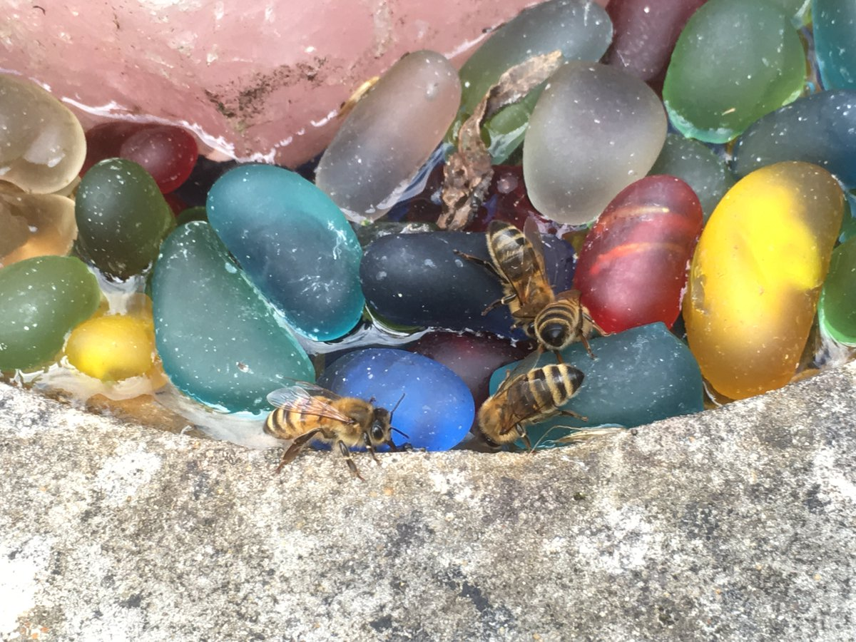 Bees and all insects need #water. Bees use water to cool their nests by evaporating the water at the entrance. Please put some water out for wildlife & make a bee drinker. All creatures need a safe place to drink. Top up the bird bath. Place a bowl of water out in the garden. pic.twitter.com/nEsl8j1u2Q