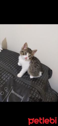 #İstanbul #Kedi #Oyuncu Kızınız Olsun İstemez Misiniz?