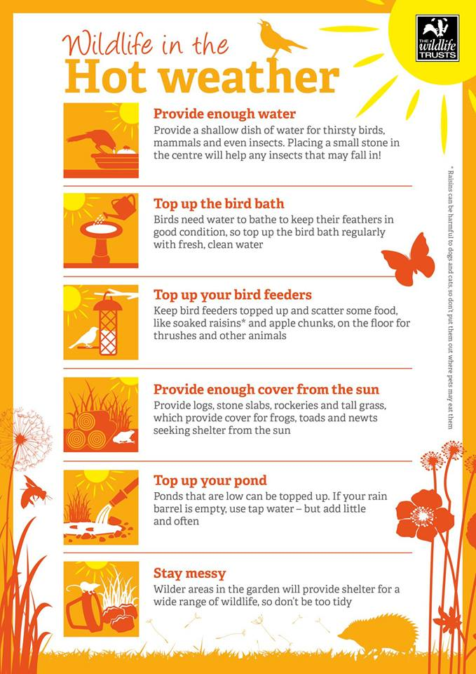 This weekend is going to be hot and dry! Make sure wildlife in your garden has enough water! #SaveWater #WaterforWildlife @LeaCatchment https://t.co/aNNPzTc2s1