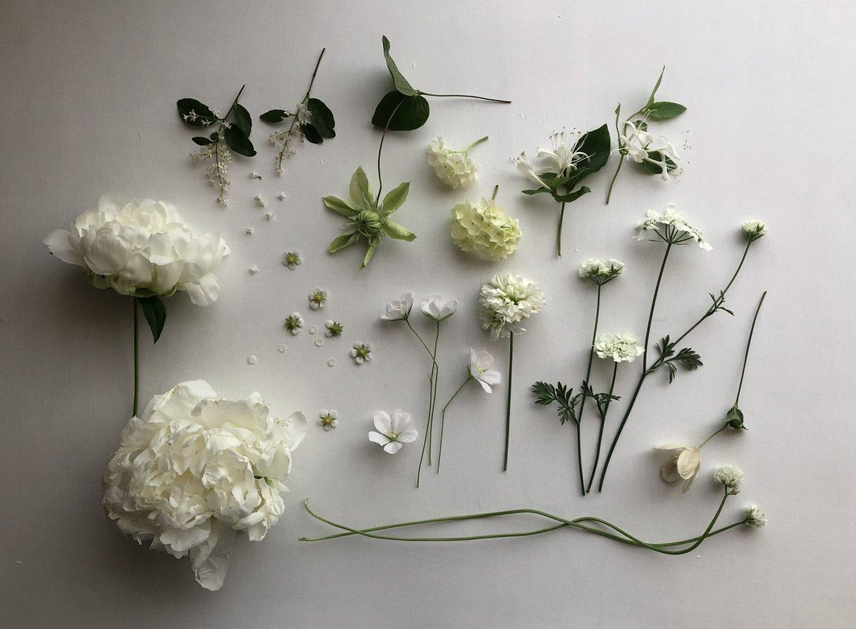 白い花は存在しない。自然界に「白」という色はない。毎年この季節に沢山の「白い」花たちを目の前にして途方に暮れていたのだけれど、白くペンキを塗った板の上にのせてみて初めて解った。「白」はたくさんの「色」を秘めている。自然界では「色」は現象でしかないし、「純白」は概念でしかないのだ。