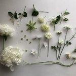 信じられる?「白い花」は存在しない…自然界に「白」というものは存在しない??
