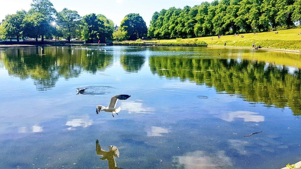 Cool reflections! #reflection #water #wildlife #park #FridayThoughts #weather #heatwave #sunshinepic.twitter.com/bgq1Lbxj2J