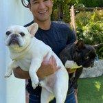 Image for the Tweet beginning: More than ever, pet adoption