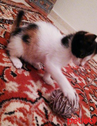 #İstanbul #Kedi 2 Aylık Çok Uysal Ve #Oyuncu Kızımız Luna Ö...